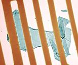 graphene membranes
